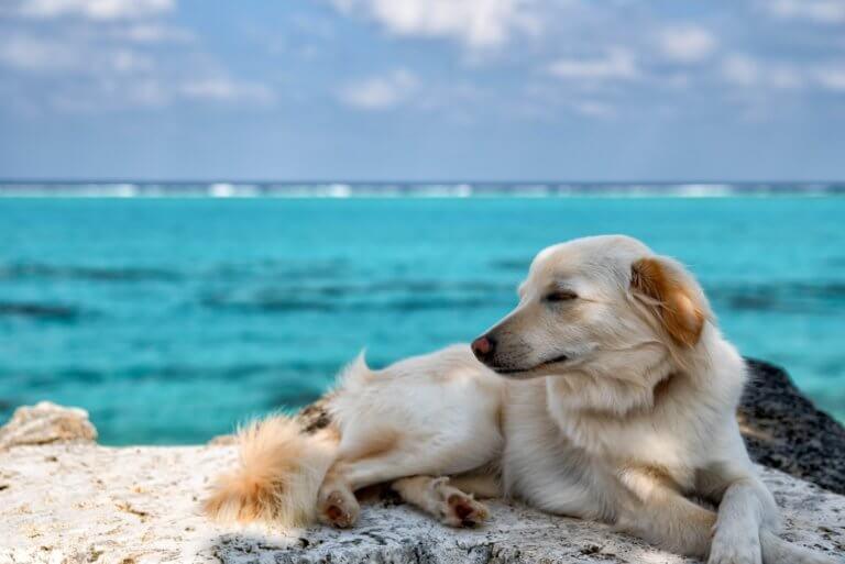 フォトギャラリー 犬