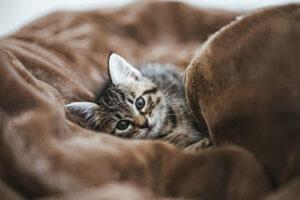 フォトギャラリー ネコ